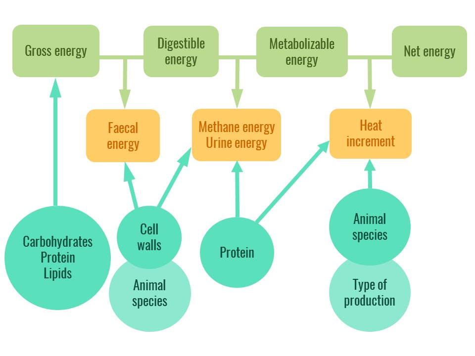 The different types of feed energy